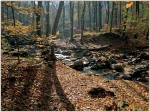 Szőke-forrás-völgy