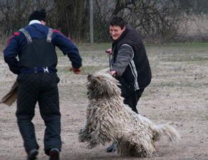 Komondor-nevelese