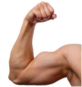 bicepsz növelése