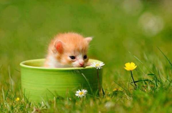 Cuki cica,