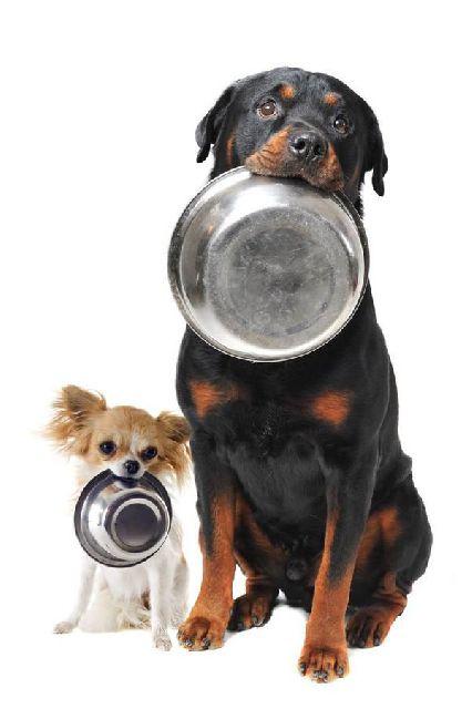 Enni akarunk!