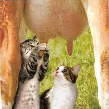 Mi lesz már azzal a tejjel?